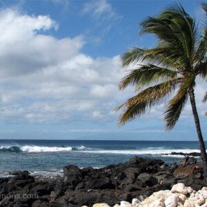 Lava & Coral - Hawaii
